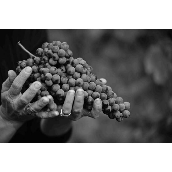 Travaglini Gattinara DOCG Piemonte-31