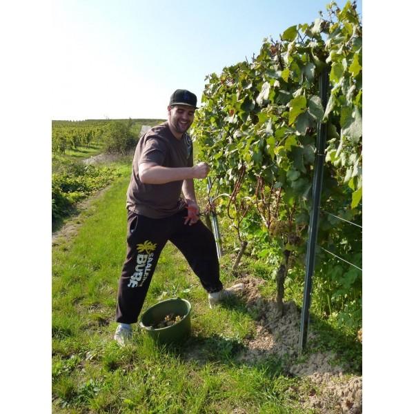 WeingutFreitagCasualFreitagRieslingTrockenRheinhessen-31