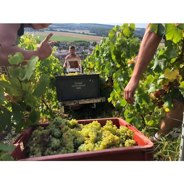 ChampagneMarteauxGuillaumeMarneLEMETQUEExtraBrut-312