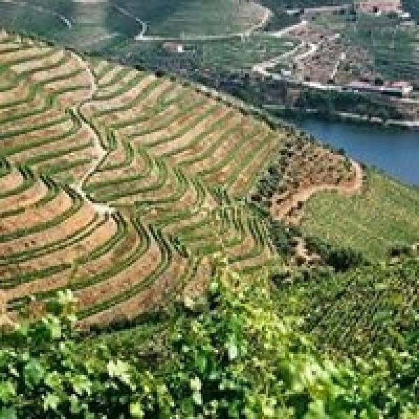 Dalva Port Colheita 1995-31
