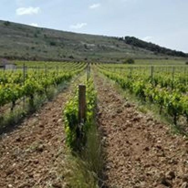 Austum Ribera del Duero Spanien-30