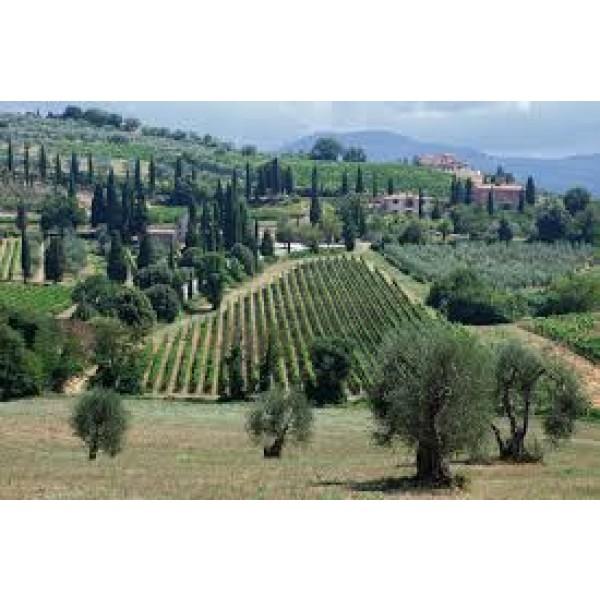 Brunello di Montalcino Le Core Toscana-30