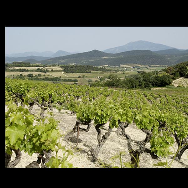 Domaine du Clos de Sixte, Alain Jaume and Fils, Lirac Rhône-30