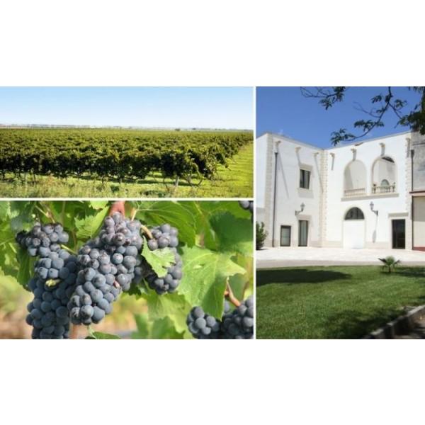 Immensum Vini Candido Salice salentino DOC Puglia-33