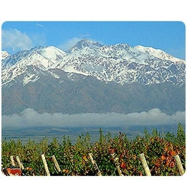 Los Tilos Sauvignon Blanc Chile-31