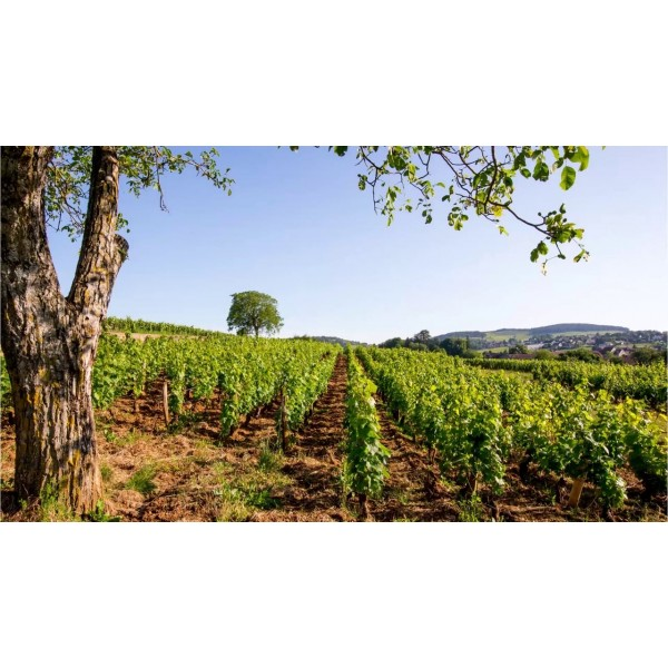 Beaune Domaine Bellang and Fils Bourgogne-31