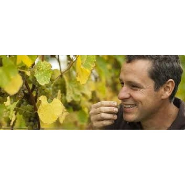 WeingutWagnerStempelVDPRheinhessenGGHeerkretzRiesling-31