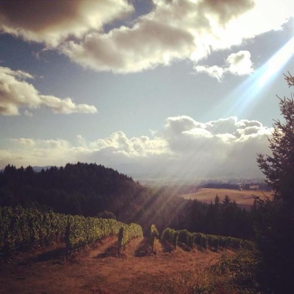 Roots Winery Pinot Noir Willamette Valley Oregon-31