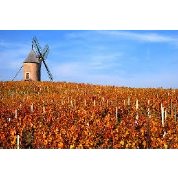 Mommessini Moulin-À-Vent Grand Cru Beaujolais-31