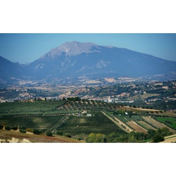 Gran Sasso, Terre di Chieti, Abruzzo, Sangiovese-30
