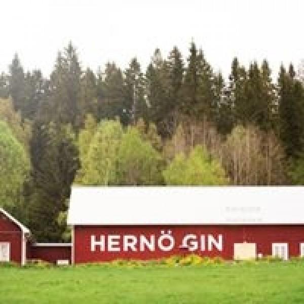 Hernö Old Tom Gin-31