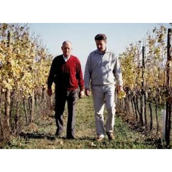 Sauvignon Blanc Vieris DOC Vie di Romans-Friuli Venezia-Giulia-31