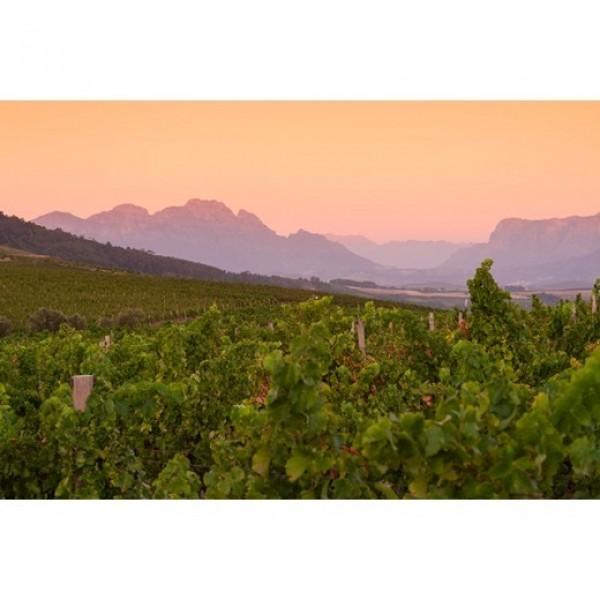 Jordan Wines Nine Yards Chardonnay-31
