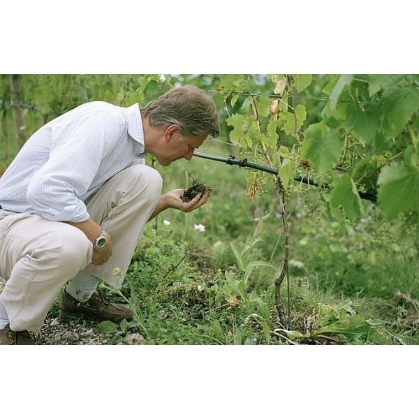 Chardonnay Sophie DOC Manincor Alto Adige Sydtyrol Terlan Lieben Aich Kaltern Mazzon.-31