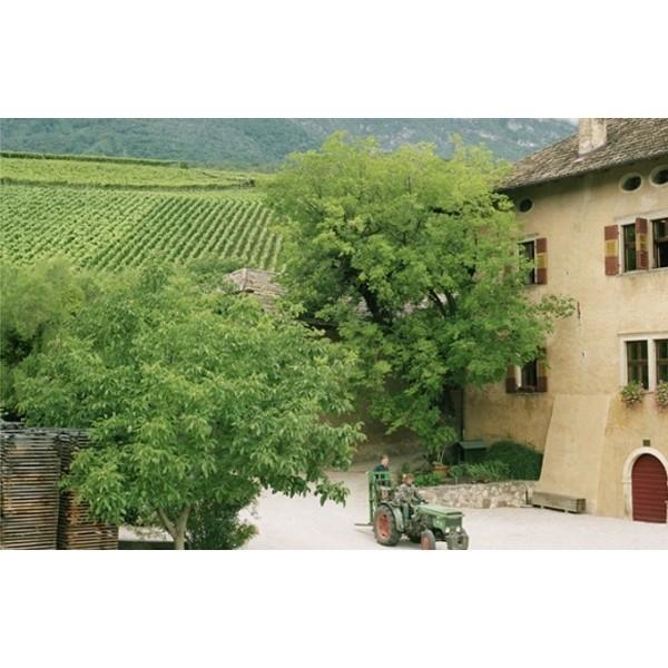 """Pinot Nero """"Mason di Mason"""" DOC Manincor Alto Adige-31"""