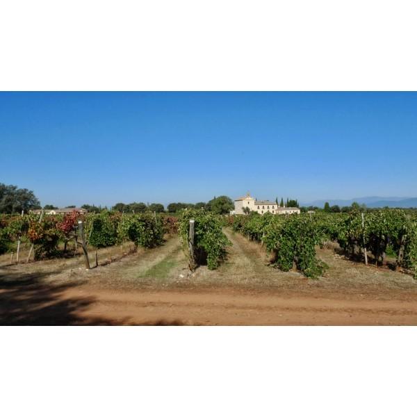 Marques de Griñon Cabernet Sauvignon Single Vineyard Estate Bottled Dominio de Valdepusa D.O.-31