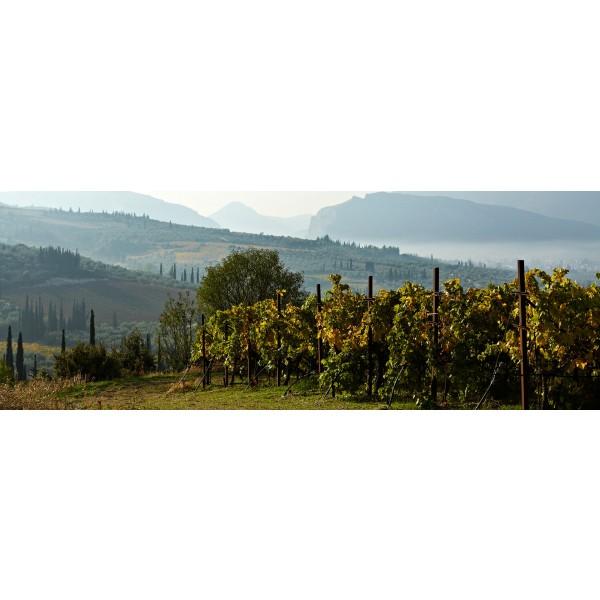 Gaia Winery Ritinitis Nobilis Retsina Nemea-31