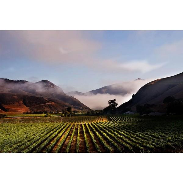 Kendall-Jackson Jackson Estate Camelot Highlands Chardonnay Santa Maria Valley, Californien-31