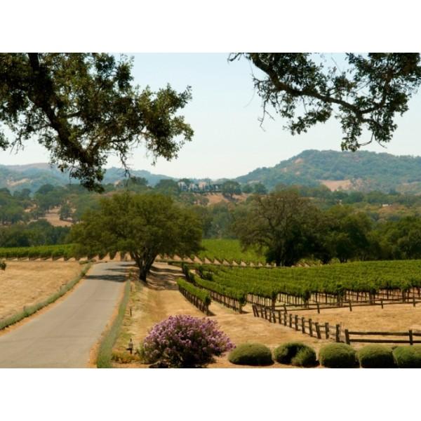 Smoking Loon, Old wine Zinfandel, Californien BEDSTE ZINFANDEL TIL PRISEN-39