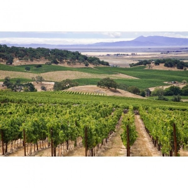 """WORLDS END, """"IF SIX WAS NINE"""", NAPA VALLEY, CALIFORNIEN-31"""