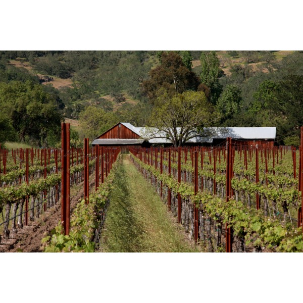 "Worlds End, ""God times, Bad times, Single Vineyard, Napa Valley-30"