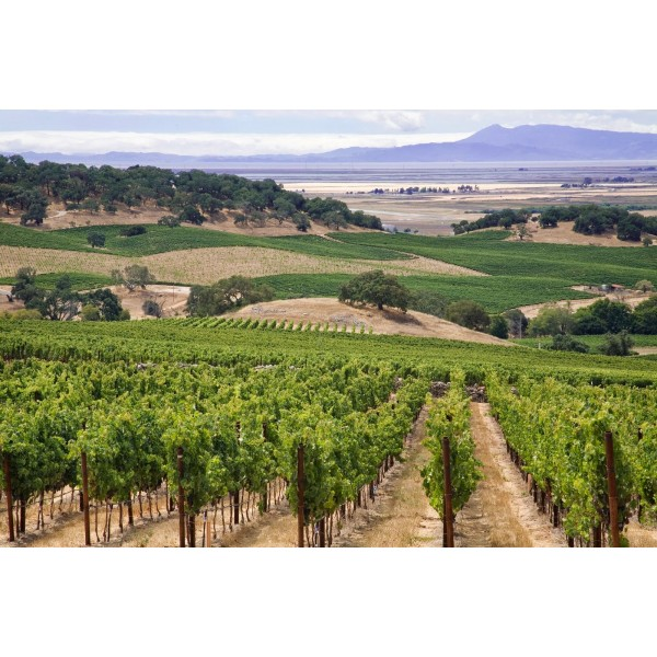 "Worlds End, ""Against the Wind"", Napa Valley, Californien-30"