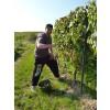 WeingutFreitagCasualFreitagRieslingTrockenRheinhessen-01