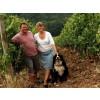 "Domaine Begude, ""Etoile"", Chardonnay, AOP Limoux-00"