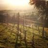 Roots Winery Pinot Noir Willamette Valley Oregon-01