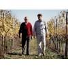 Sauvignon Blanc Vieris DOC Vie di Romans-Friuli Venezia-Giulia-01