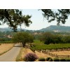 Smoking Loon, Old wine Zinfandel, Californien BEDSTE ZINFANDEL TIL PRISEN-09