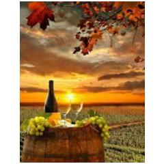 6 forskellige Zinfandel/Primitivo vine